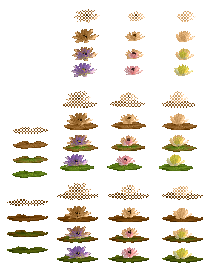 Water Lilies: Part 2 (Click to enlarge)